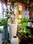 モノトーンの鉢の可愛いグリーン